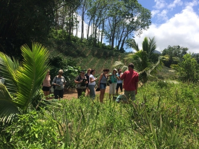 Exploring a pineapple plantation