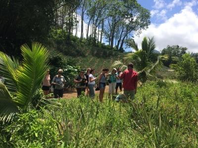 Exploring a pineapple plantation