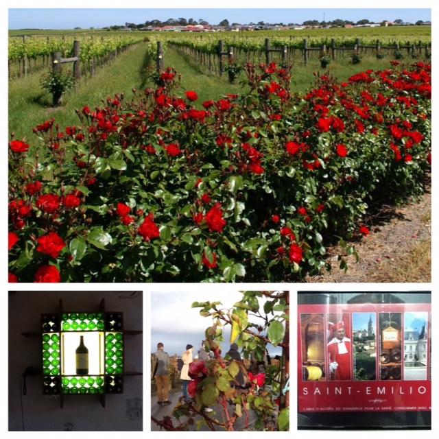 Bordeaux-roses